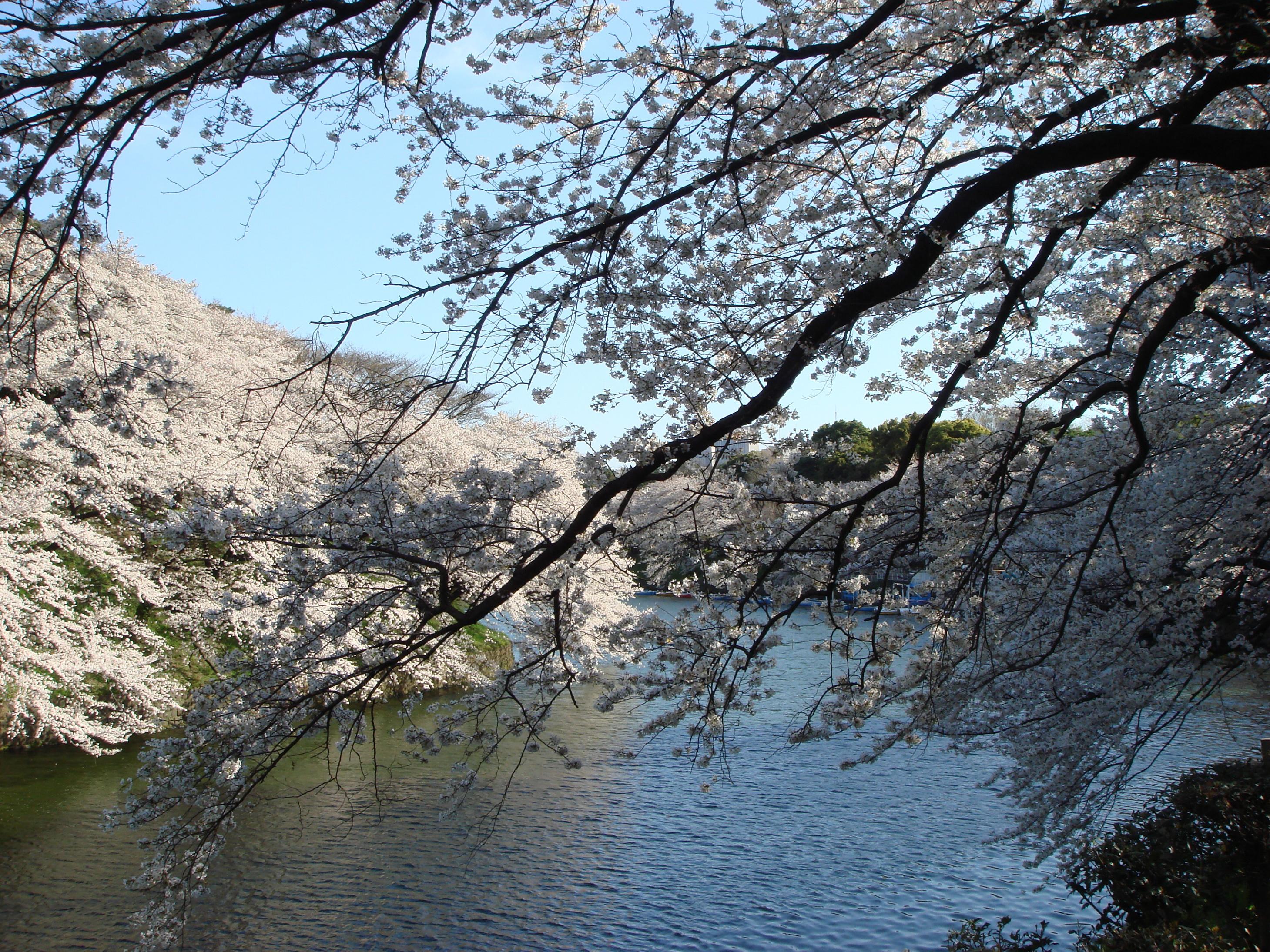 Blogchidorigafuchi1