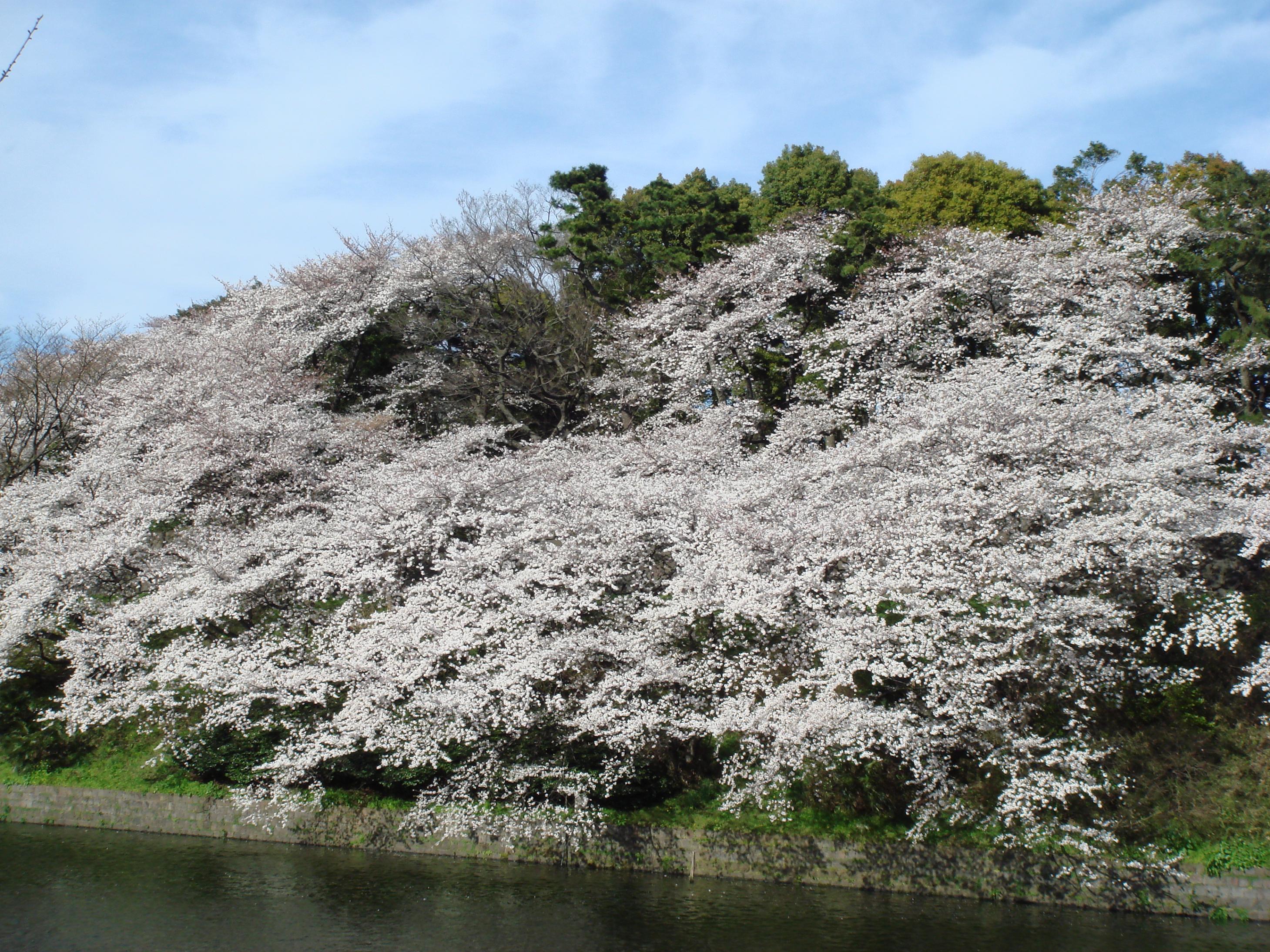 Blogchidorigafuchi2_4